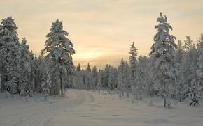 Обои зима, снег, деревья, закат