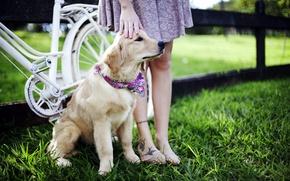 Картинка друг, собака, прогулка