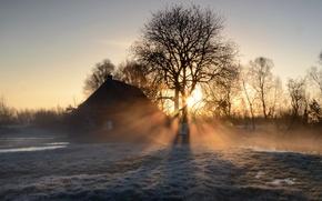 Картинка туман, дом, утро