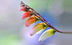 Обои природа, лепестки, цветок, растение