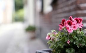 Картинка цветы, фон, улица