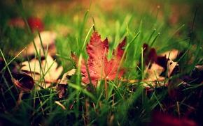 Картинка зелень, осень, трава, листья, капли, макро, лист, капельки, размытость