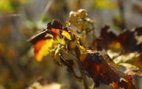 Картинка осень, лист, паутинка