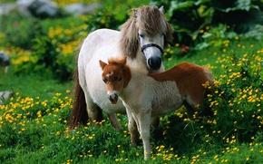 Картинка трава, лошадь, жеребёнок