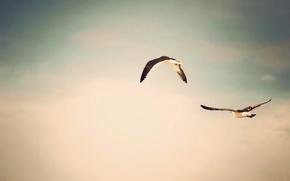 Картинка птицы, полет, фон, природа, фото, небо, обои