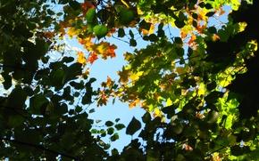 Обои небо, ветки, листья