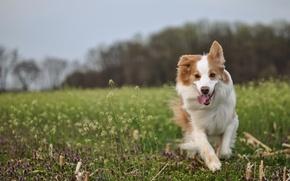 Обои собака, друг, поле