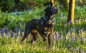 Картинка фон, друг, собака, стойка