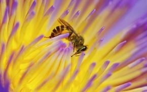 Картинка цветок, макро, природа, нектар, пчела, насекомое
