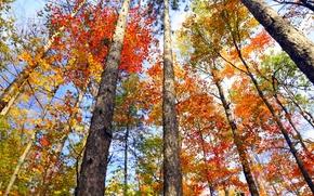Обои Онтарио, деревья, Канада, осень, листья, багрянец