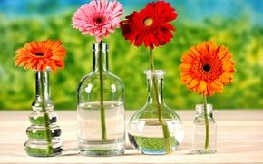 Картинка вода, цветы, стол, бутылка, хризантемы, яркость, боке, вазы
