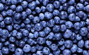 Обои черника, витамины :), еда, фон, ягода