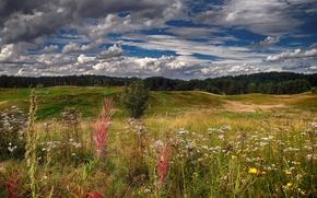 Картинка лето, небо, облака, цветы, холмы, полевые