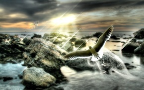Обои лучи, пасмурно, полет, dream, птица, мечта