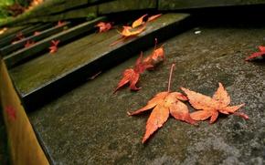 Картинка макро, фото, листва, ступени