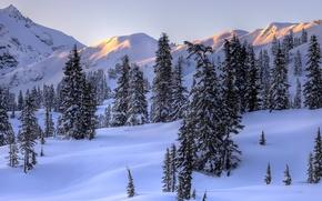 Картинка зима, небо, снег, деревья, пейзаж, горы, ель, склон