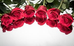 Картинка бутоны, розы, отражение, фон