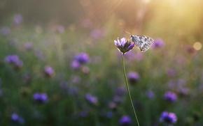 Картинка поле, лучи, цветы, бабочка, луг, насекомое