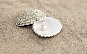 Обои ракушка, песок, жемчуг