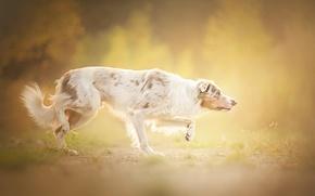 Картинка туман, друг, собака