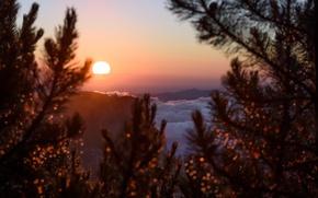 Обои twilight, sunset, mountains, clouds, sun, dusk, branches, Romania, Neamt, Ceahlău