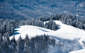 Картинка зима, лес, снег, пейзаж, природа, обои, гора, край, wallpaper, Россия, сочи, Красная Поляна, дмитрий чистопрудов, …