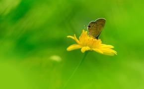 Обои поле, цветок, бабочка, крылья, лепестки, луг, насекомое