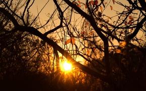 Картинка trees, morning, sun, sunrise, dawn, branches, sun ray, silhouettes