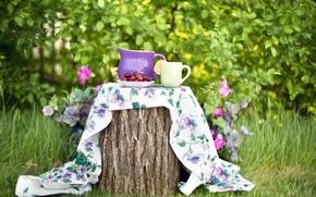 Картинка лето, природа, ягоды, пень, сад, тарелка, чашка, кувшин, скатерть