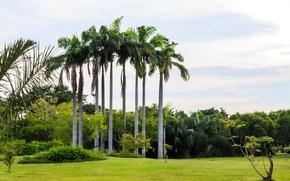 Картинка зелень, трава, солнце, деревья, цветы, тропики, пальмы, газон, Таиланд