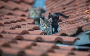 Картинка крыша, глаза, взгляд, котята