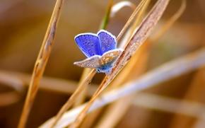 Обои трава, насекомое, бабочка