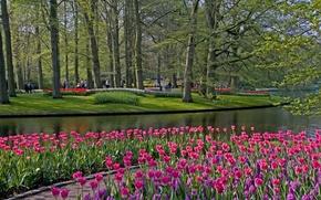 Обои цветы, Keukenhof, парк, Lisse, деревья, тюльпаны, Netherlands, трава, пруд