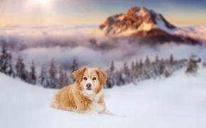 Обои зима, снег, собака