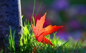 Картинка зелень, трава, макро, красный, фон, дерево, обои, размытие, листик, wallpaper, кора, листочек, широкоформатные, background, tree, …