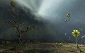 Обои растения, свет, Облака