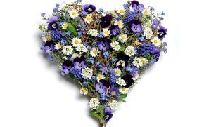 Обои фото, Цветы, Сердце, Ромашки, Анютины глазки, Морозник