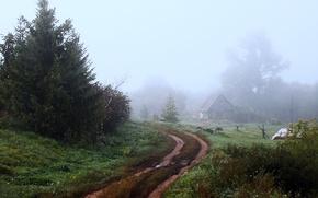Картинка дорога, деревья, туман, дом