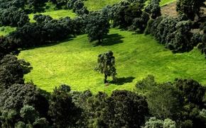Обои деревья, зелень, поле