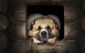 Картинка друг, собака, страж