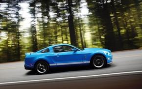 Обои скорость, Ford, Shelby GT 500