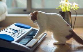 Картинка кошка, цветы, дом, пол, Ben Torode, Hannah, Benjamin Torode, музыкальный интсрумент