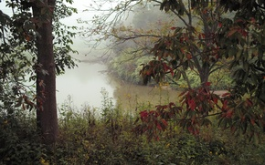 Картинка осень, лес, деревья, туман, река