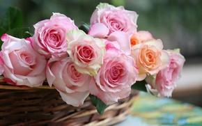 Картинка розы, корзинка, бутоны, © Elena Di Guardo