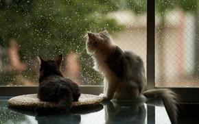 Картинка кошки, дом, дождь, окно