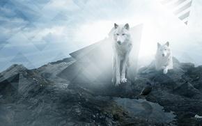 Картинка скала, камни, волк, треугольник