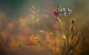 Картинка цветы, блики, бабочка, поляна, луг, насекомое, обои от lolita777