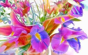 Обои цветы, штрих, краски, лепестки, абстракция, линии