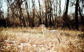 Картинка поле, собака, охота