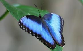 Картинка зеленый, бабочка, листочек, Голубая